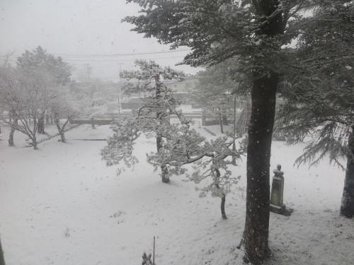 重文本館からの雪景色 2020.1.21 午前_c0075701_14082804.jpg