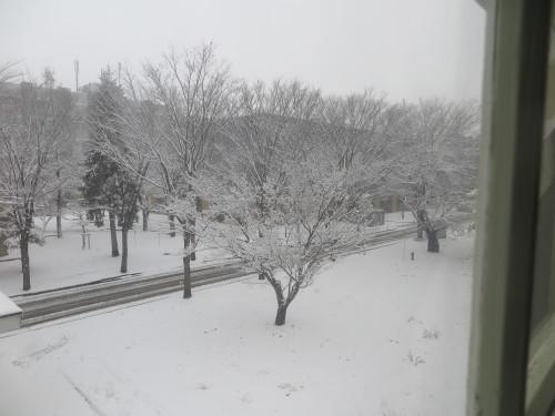 重文本館からの雪景色 2020.1.21 午前_c0075701_14083621.jpg