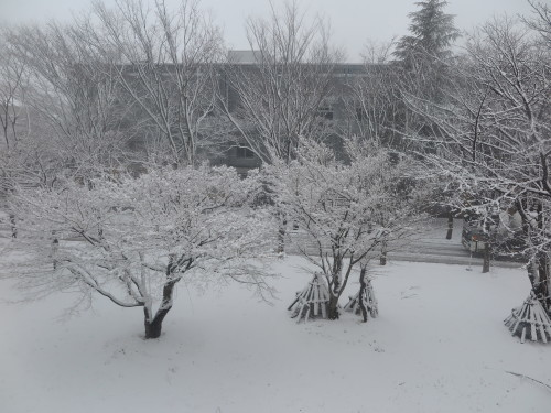 重文本館からの雪景色 2020.1.21 午前_c0075701_14084663.jpg