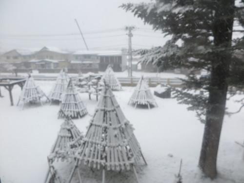 重文本館からの雪景色 2020.1.21 午前_c0075701_14084947.jpg