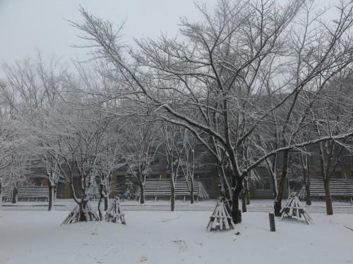 重文本館からの雪景色 2020.1.21 午前_c0075701_14092867.jpg