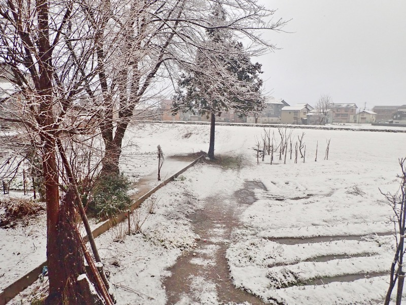 久し振りに雪が・・・_c0336902_20325035.jpg