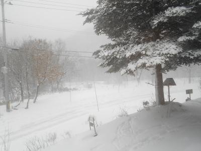 2020年 1月21日 火曜 吹雪 -2度_f0210811_11040530.jpg