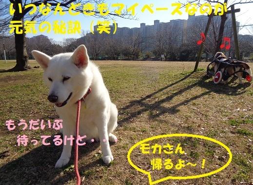 モカ姉さん復活中!!_f0121712_23303281.jpg