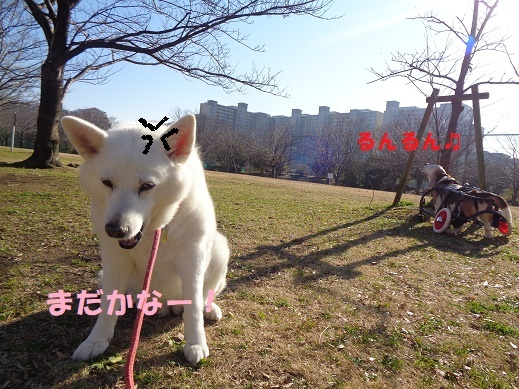 モカ姉さん復活中!!_f0121712_23303901.jpg
