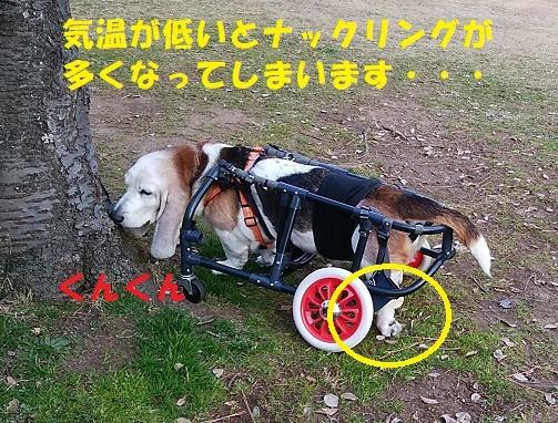 モカ姉さん復活中!!_f0121712_23584451.jpg