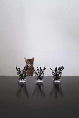 [猫的]ルウ好み_e0090124_13510992.jpg