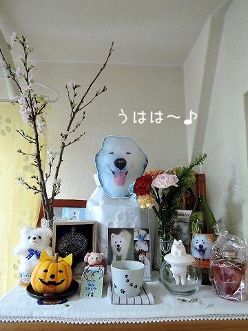 1月に桜_c0062832_12572068.jpg