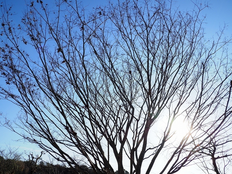 樹木_e0374932_07425634.jpg