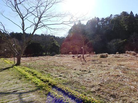 草刈り大作戦~2020~_a0123836_13393472.jpg