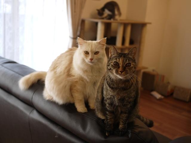 猫のお留守番 天ちゃん麦くん茶くん〇くんAoiちゃん編。_a0143140_21594738.jpg