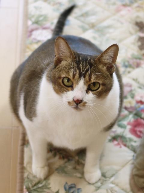 猫のお留守番 ガブリエルくん編。_a0143140_22194977.jpg