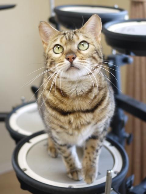 猫のお留守番 ミツコちゃん編。_a0143140_22284907.jpg