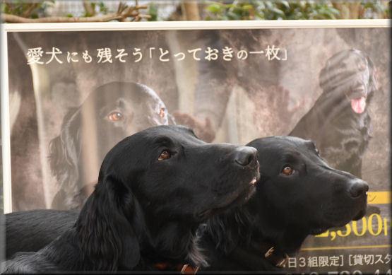 ポスターと記念撮影 _f0363141_07320437.jpg