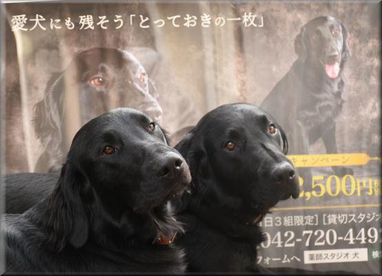 ポスターと記念撮影 _f0363141_07334104.jpg