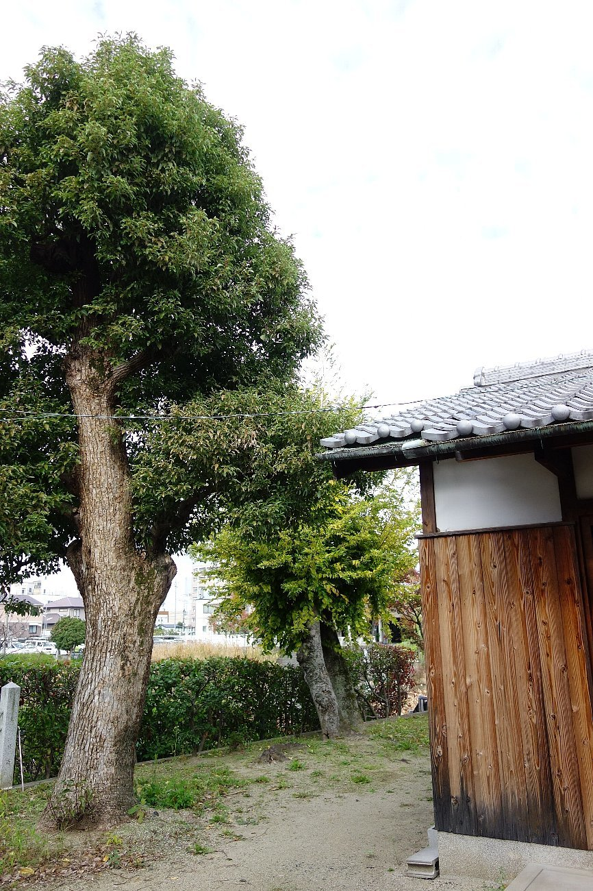 高槻市 小寺池の八幡神社_c0112559_08512614.jpg