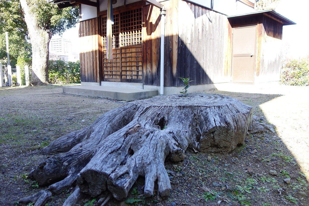 高槻市 小寺池の八幡神社_c0112559_08515756.jpg