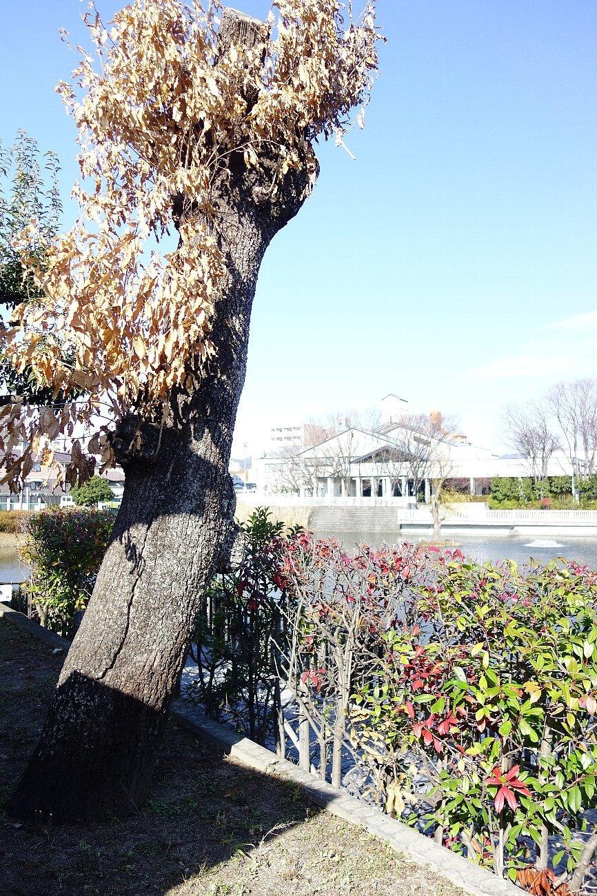 高槻市 小寺池の八幡神社_c0112559_08532543.jpg