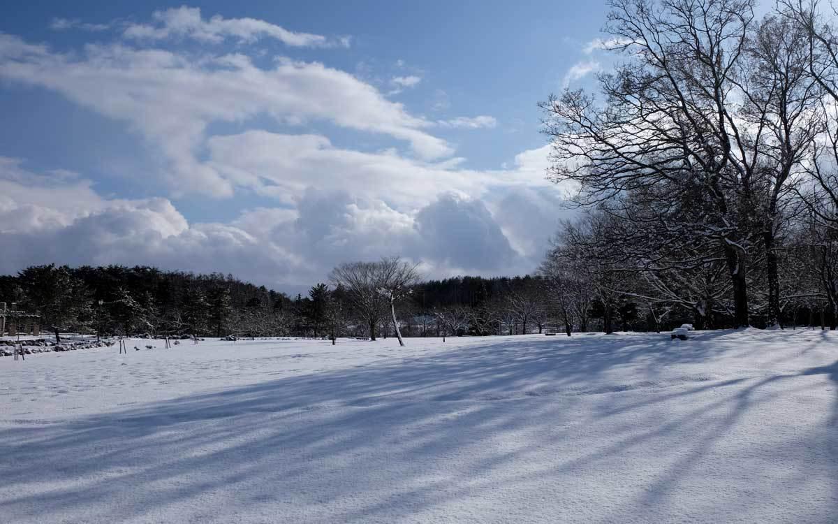 冬の公園散歩_e0220159_13571291.jpg