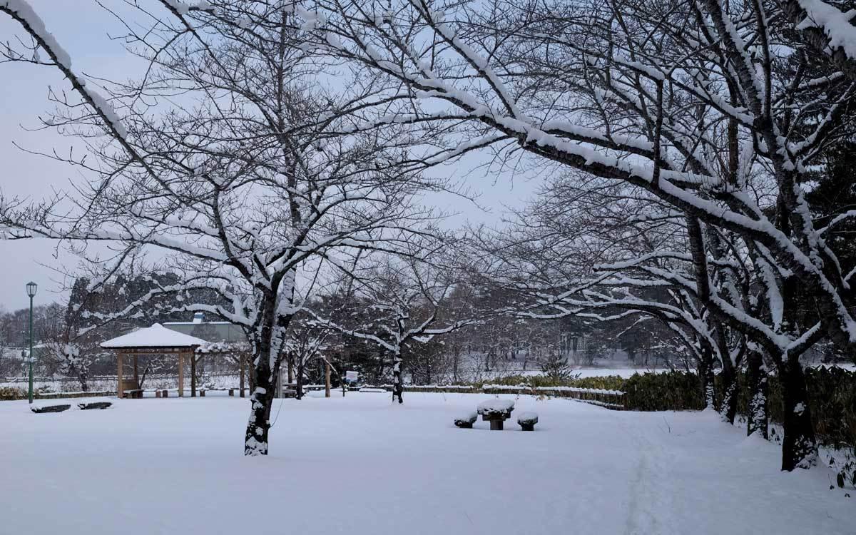 冬の公園散歩_e0220159_14002580.jpg