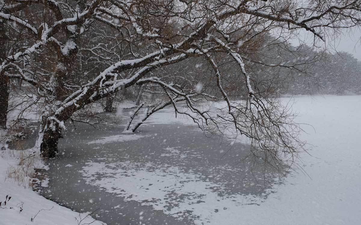 冬の公園散歩_e0220159_14014149.jpg