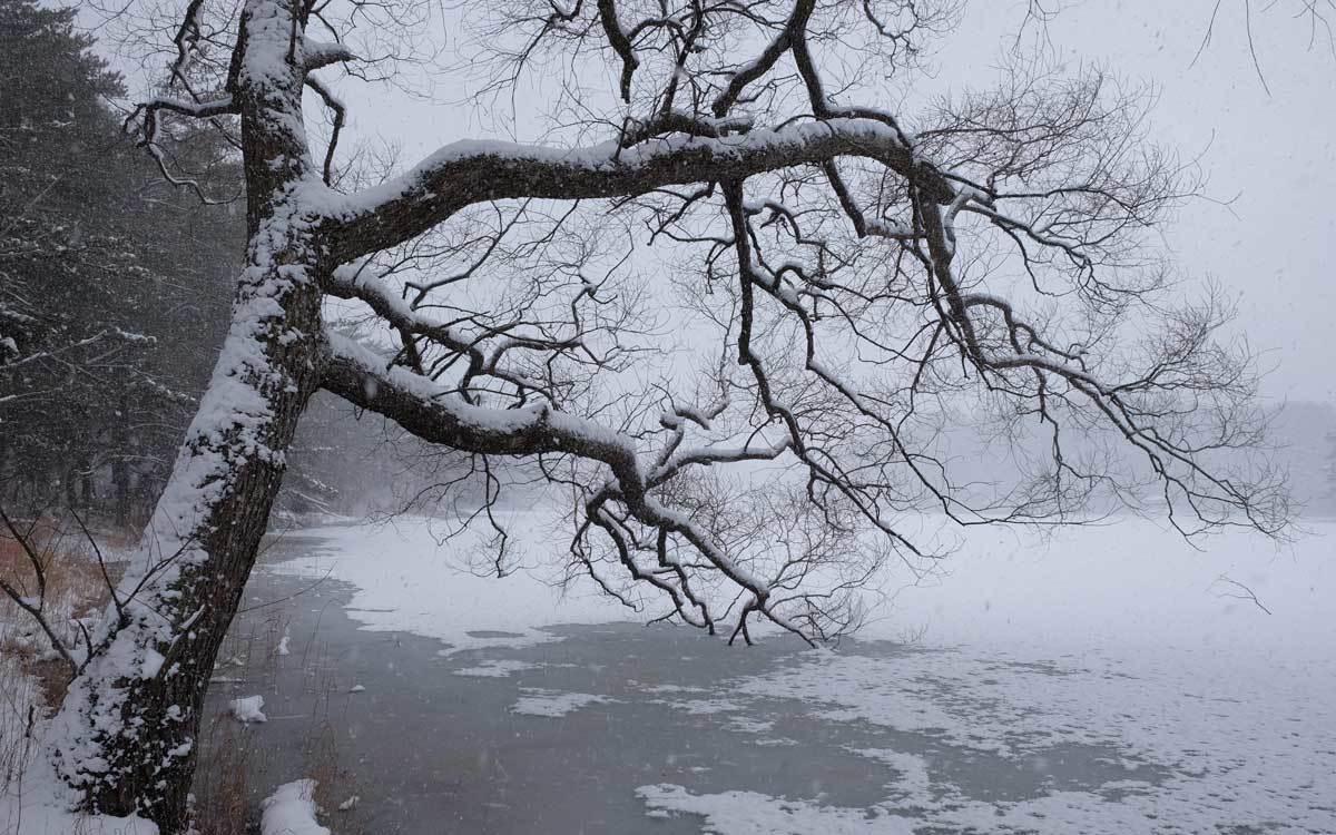 冬の公園散歩_e0220159_14033037.jpg