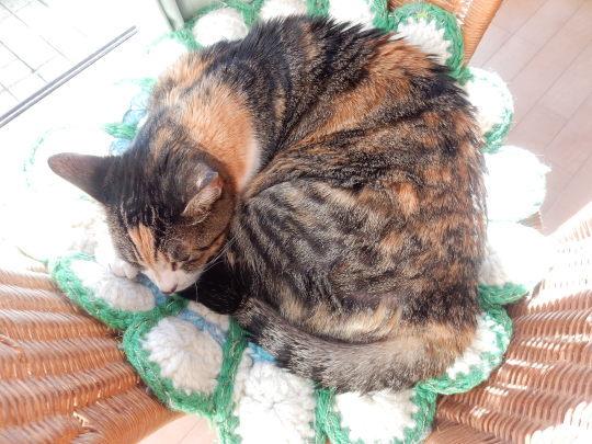 '20,1,21(火)フード付き猫ベッドなのに!_f0060461_09473588.jpg