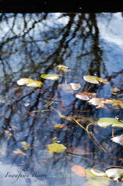 冬の公園 **_d0344864_20430562.jpg