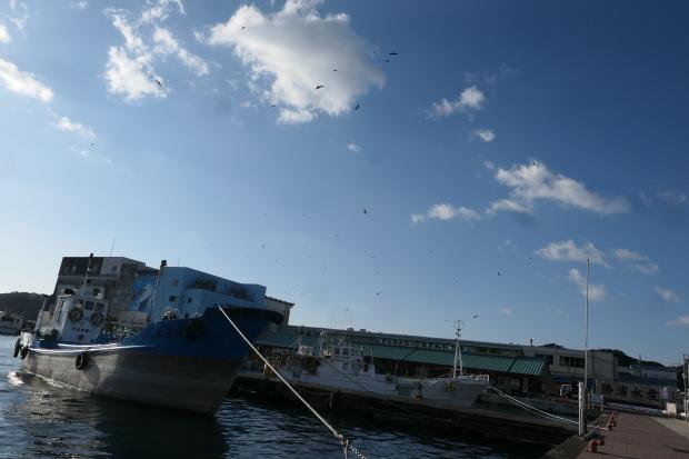 漁港とトンビ_d0193569_06593163.jpg