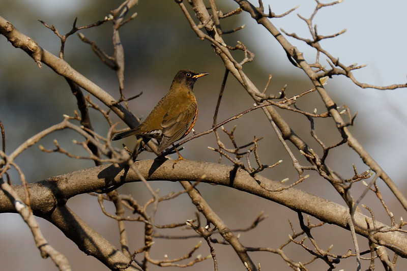 冬鳥のごく普通の・・・_f0368272_20213078.jpg