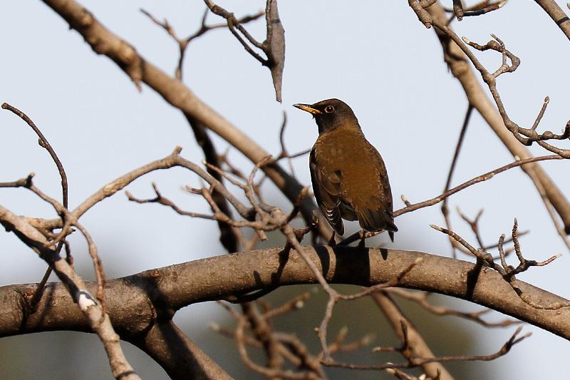 冬鳥のごく普通の・・・_f0368272_20213987.jpg