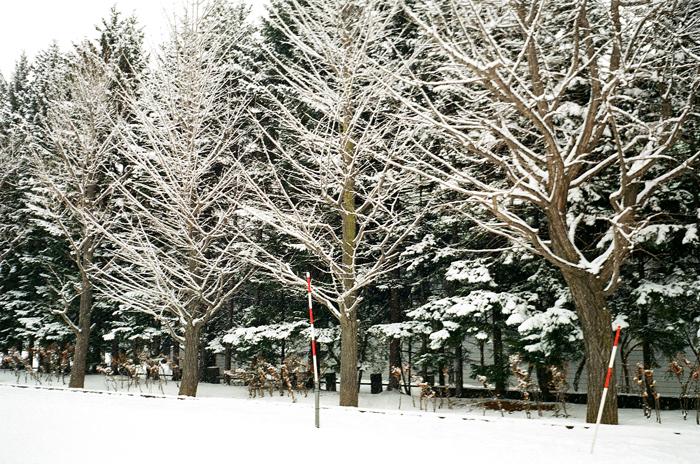 中島公園の雪景色_c0182775_1716169.jpg