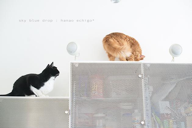 猫の家族_d0355575_13092813.jpg