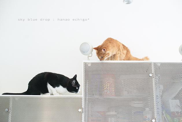 猫の家族_d0355575_13093120.jpg