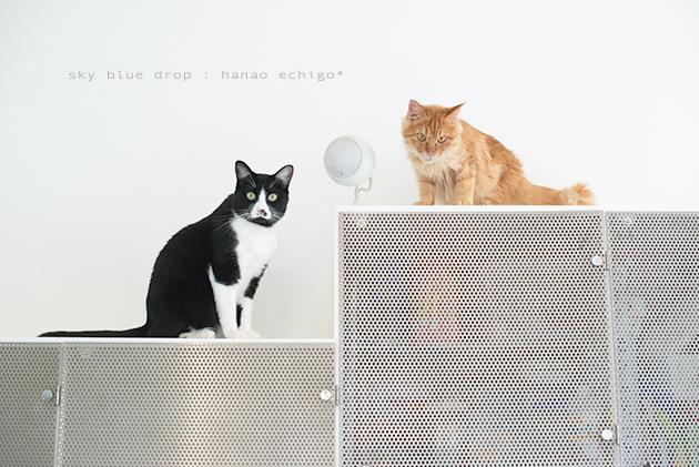 猫の家族_d0355575_13093320.jpg