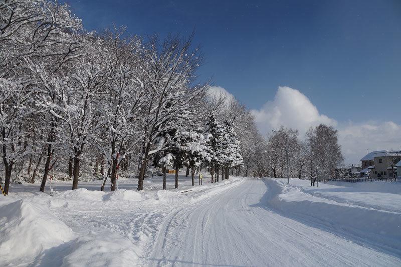 雪景色_d0162994_10245630.jpg