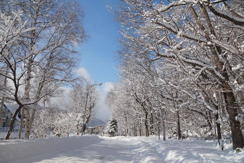 雪景色_d0162994_10250403.jpg