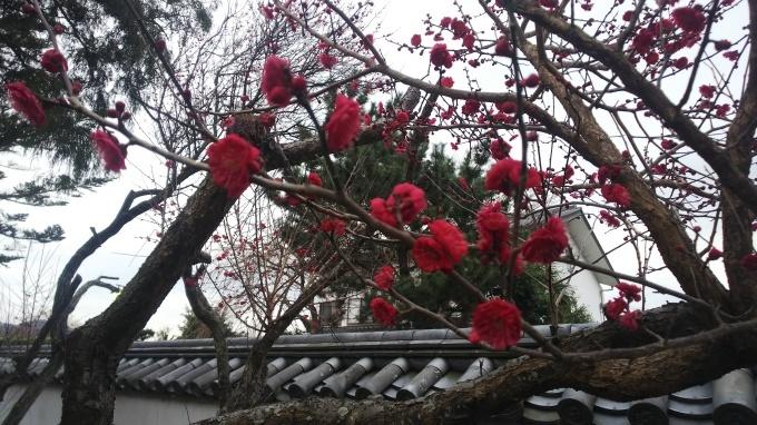 冬を楽しむ   68_b0239402_11130038.jpg