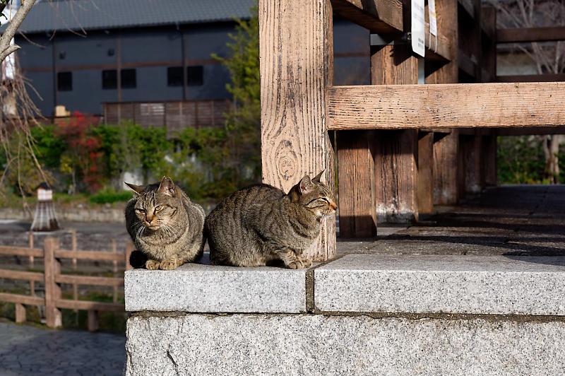 町角ニャンコ・伏見のニャンコ_f0032011_19362005.jpg