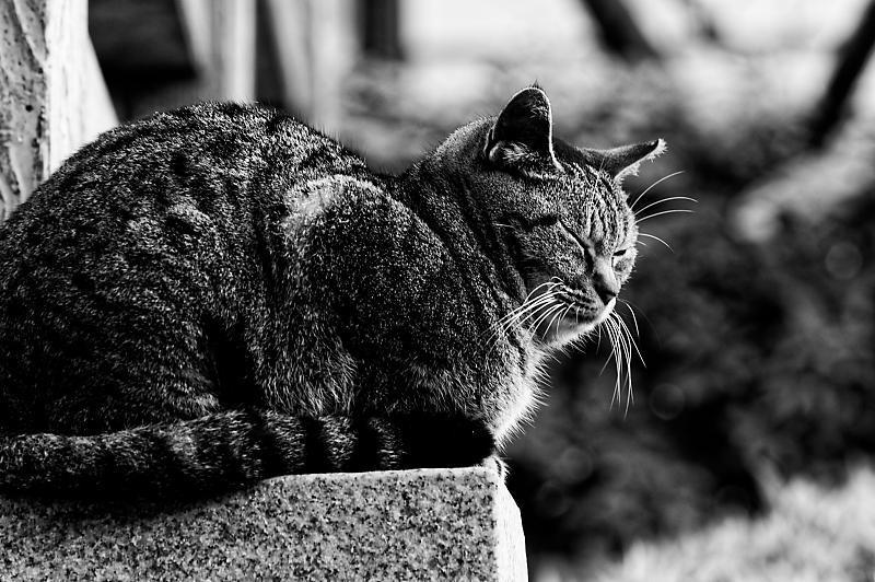 町角ニャンコ・伏見のニャンコ_f0032011_19362075.jpg