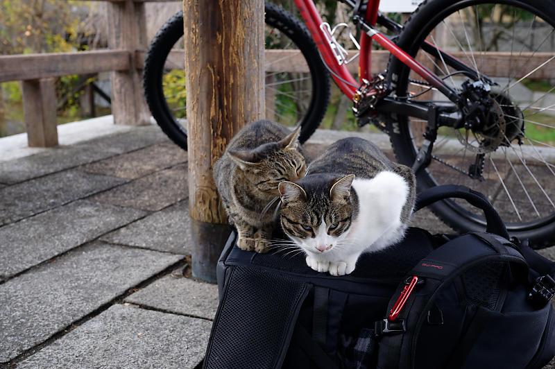 町角ニャンコ・伏見のニャンコ_f0032011_19375236.jpg