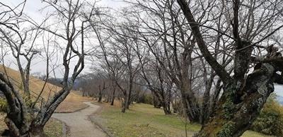 宮川を歩く_f0129726_21333720.jpg