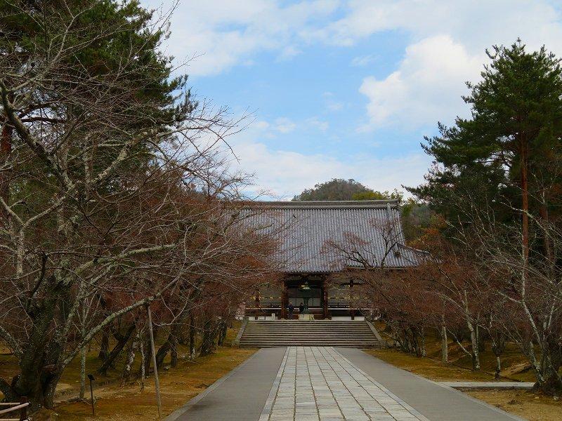 仁和寺の金堂伽藍模様20200122_e0237645_16501539.jpg