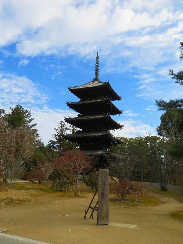 仁和寺の五重塔20200122_e0237645_16532332.jpg