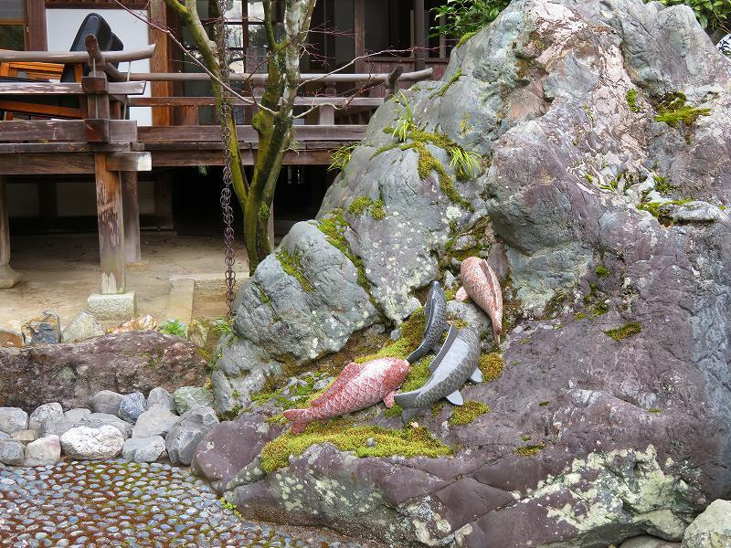 松尾大社の神使(鯉と亀)20200122_e0237645_22270763.jpg