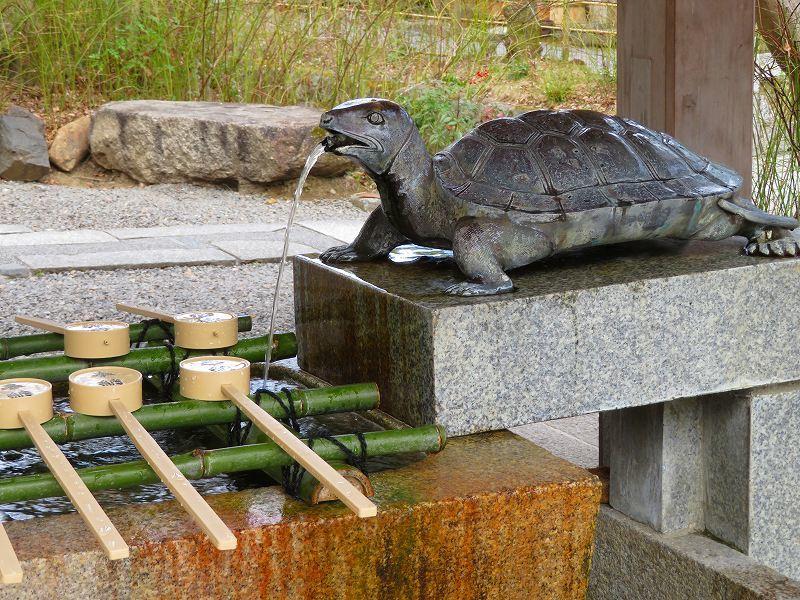 松尾大社の神使(鯉と亀)20200122_e0237645_22270794.jpg