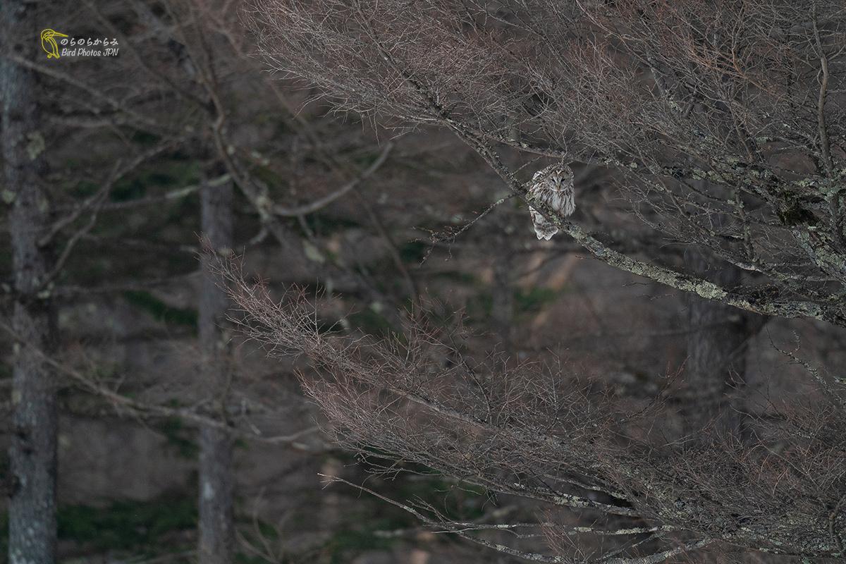 フクロウのいる森_d0360547_10414088.jpg