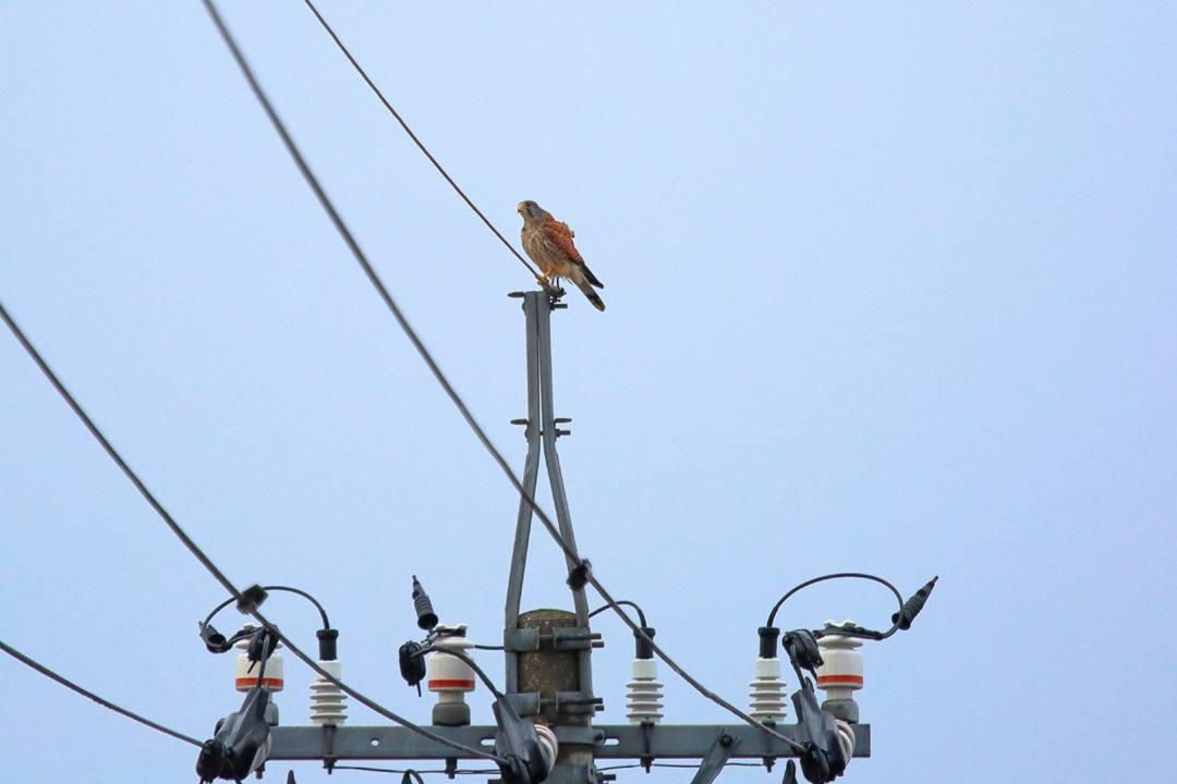 白鳥 1/20その3_e0403850_20222807.jpg