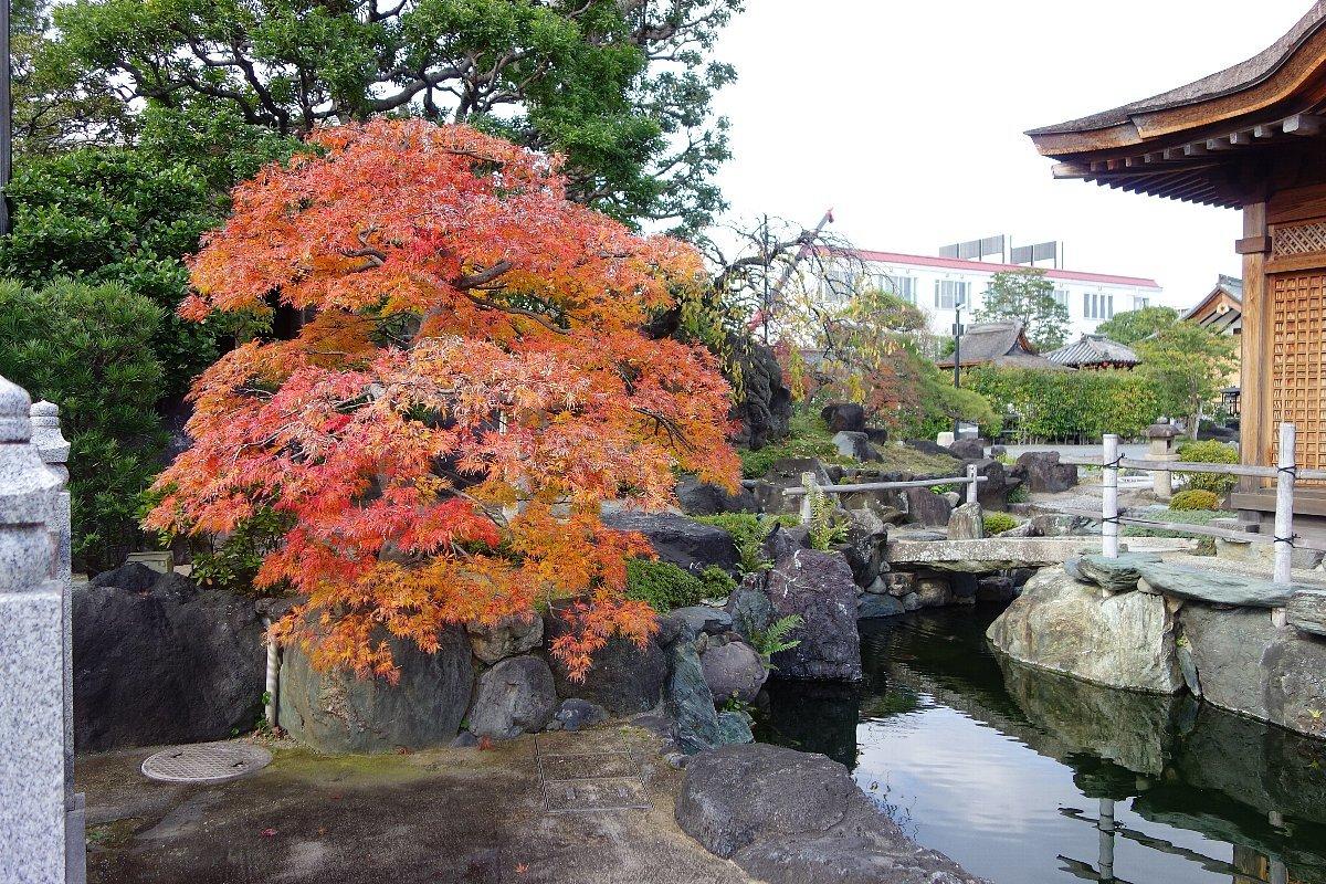 秋の総持寺庭園_c0112559_08411287.jpg