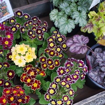 オークリーフ(今日のお店の花たち)_f0049672_16264946.jpg